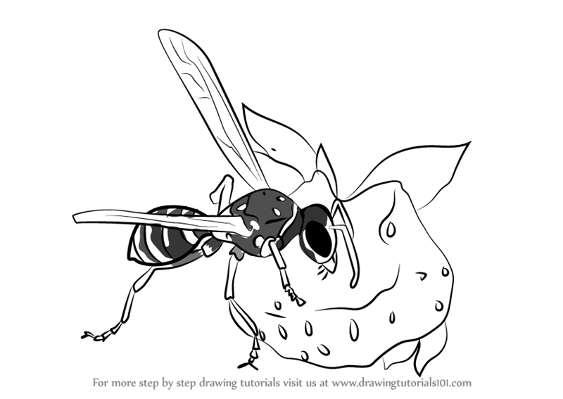 800x567 Learn How To Draw Wasp Eating Honey (Wild Animals) Step By Step