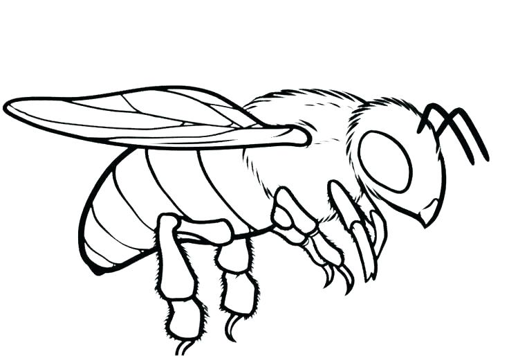 736x514 Beautiful Bee Coloring Page Best Of Honey Pages Ideal New