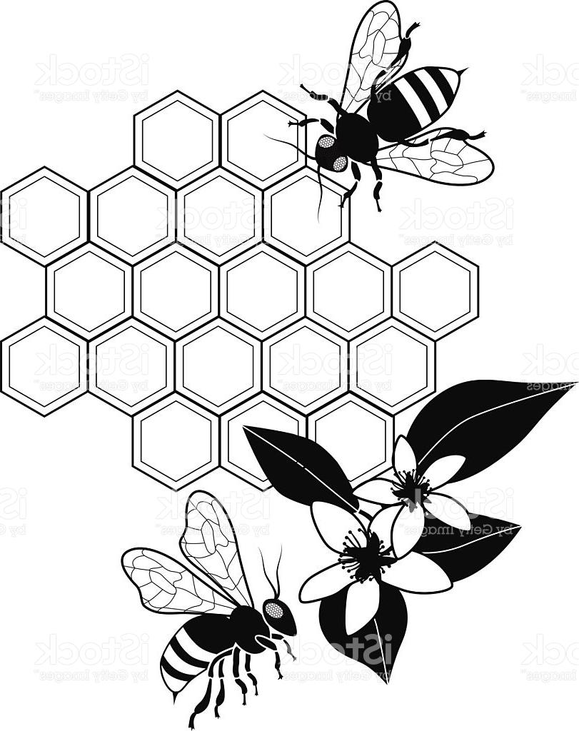 811x1024 Best Vector Honey Bees With And Orange Blossoms Cdr