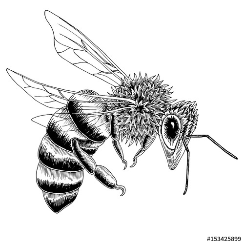 500x500 Hand Drawn Bee Sketch In Black And White Vector Illustration