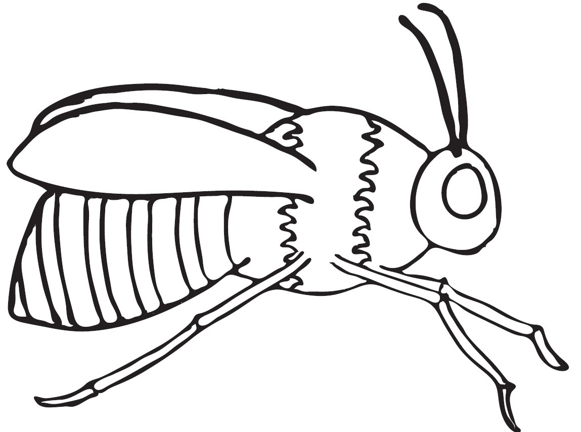 1149x854 Honey Bee Coloring Page Free Download