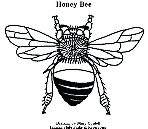 500x435 Honey Bee Coloring Pages 38 In Addition To Cartoon Bee And Flower