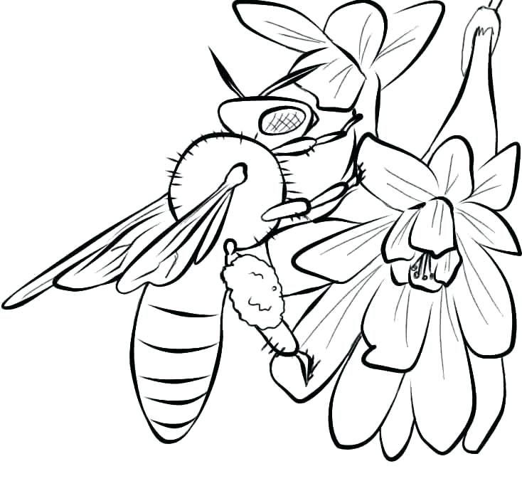 734x676 Honey Bee Coloring Pages Bee Coloring Pages To Print Honey Beehive