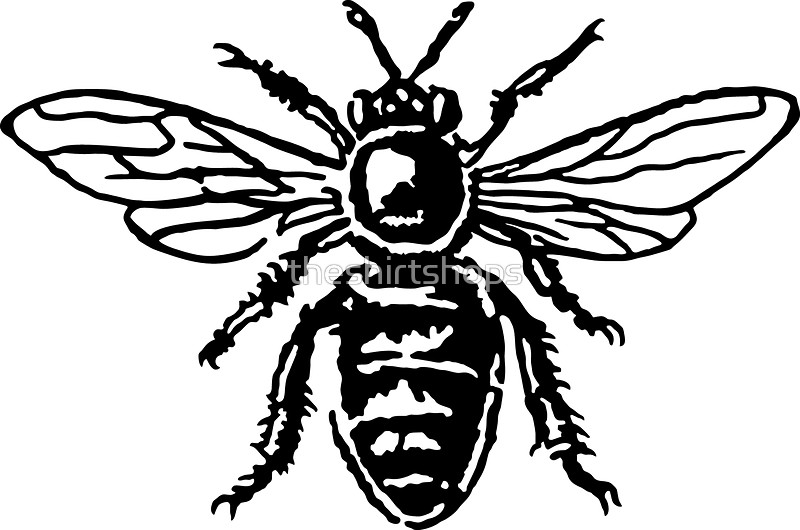 800x530 Honey Bee Stickers By Theshirtshops Redbubble