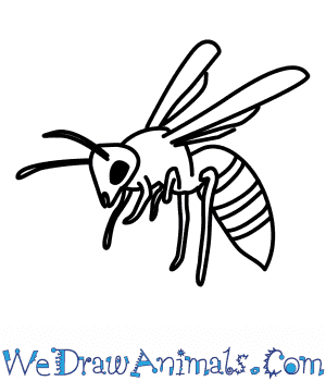 300x350 How To Draw A Wasp