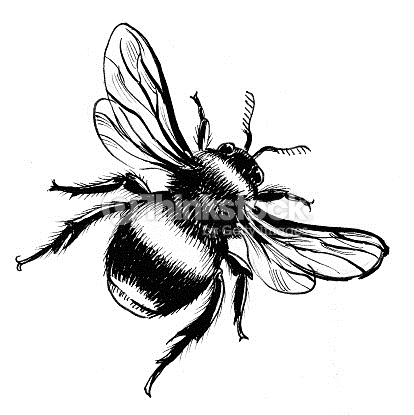 414x415 Ink Drawing Of A Bumble Bee Drawing Idea's Bumble