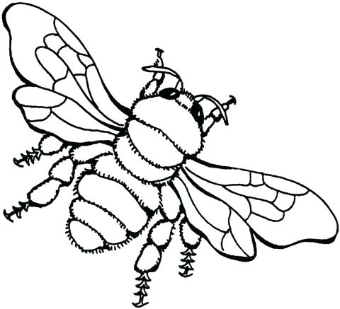 480x437 Awesome Honey Bee Coloring Page Image 3 Pages