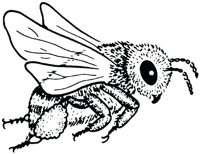 684x525 Bee Coloring Page Cartoon Honey Bee With Striped Shirt A Page