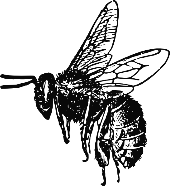 546x596 Bee Drawing Clip Art