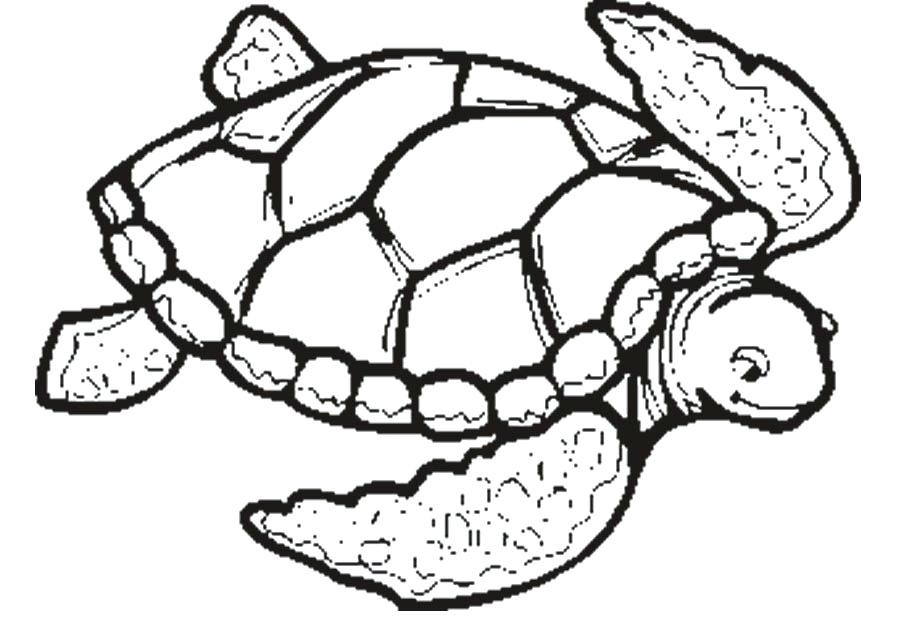 900x632 Practical Sea Turtle Pictures To Color Baby Honu