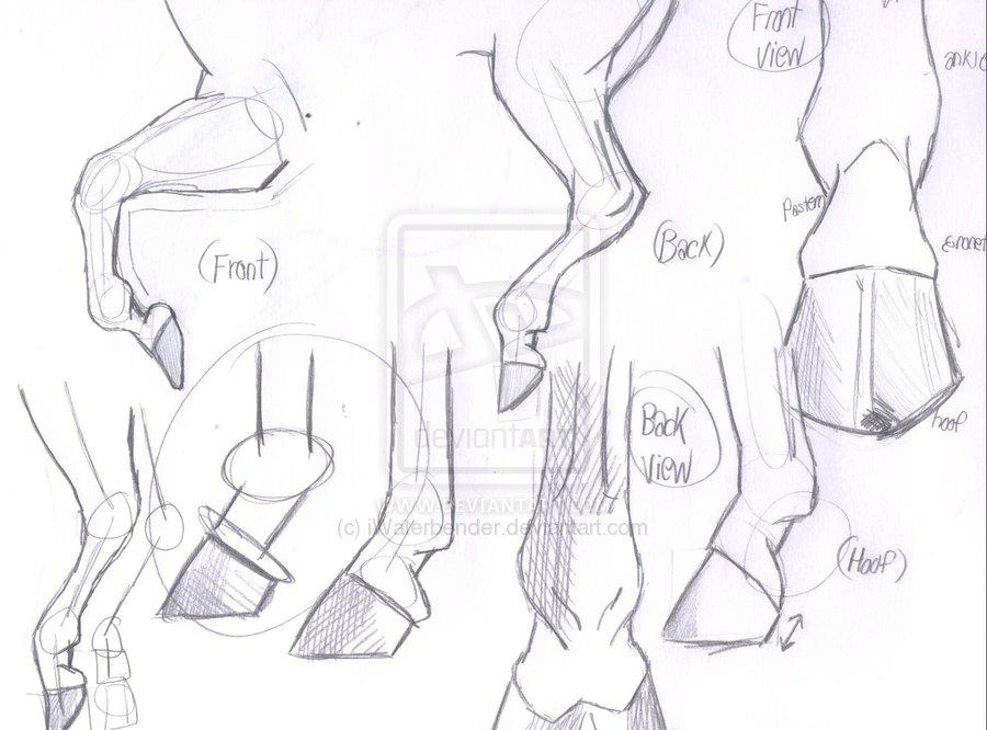 900x666 Horse Hooves And Legs Sketch By Iwaterbender Rysowanie Koni