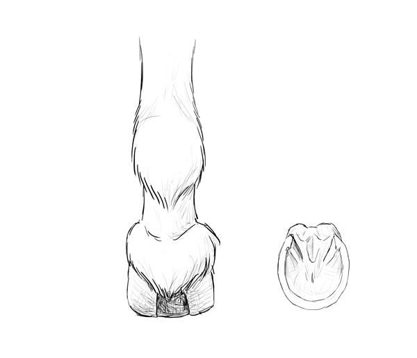 600x515 How To Draw Animals Horses, Their Anatomy And Poses
