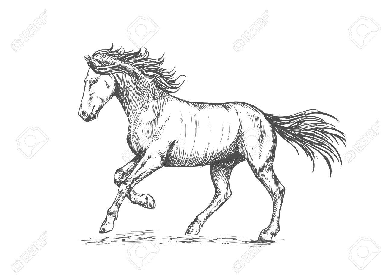 1300x919 Prancing Horse With Stomping Hoof. Sketch Portrait Of Mustang