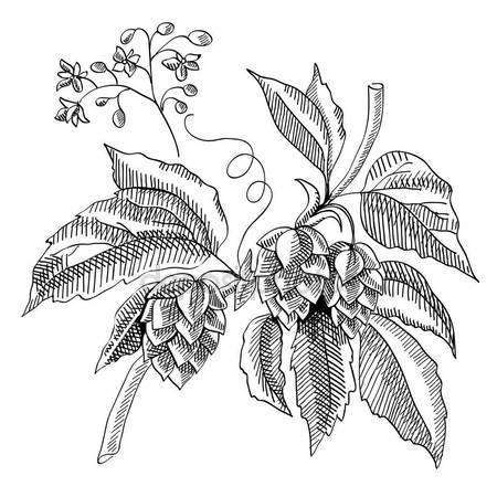 450x450 Moth Acherontia Atropos, Black White Drawing, Hatched