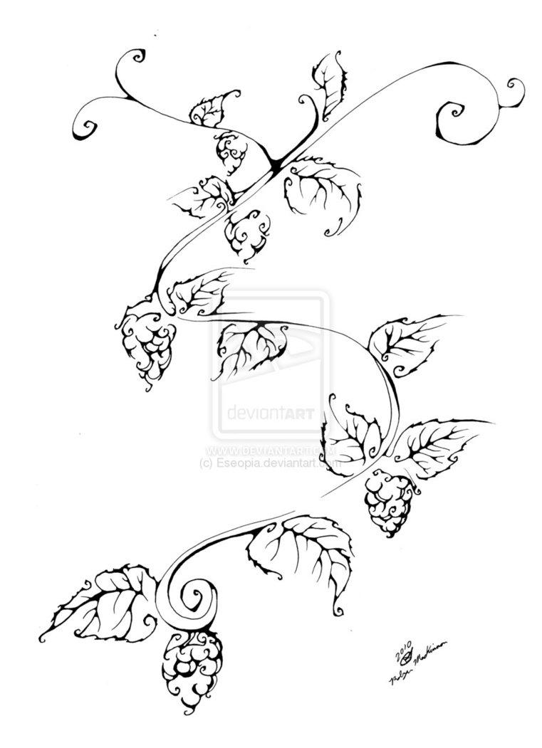 761x1051 Drawings Of Hops