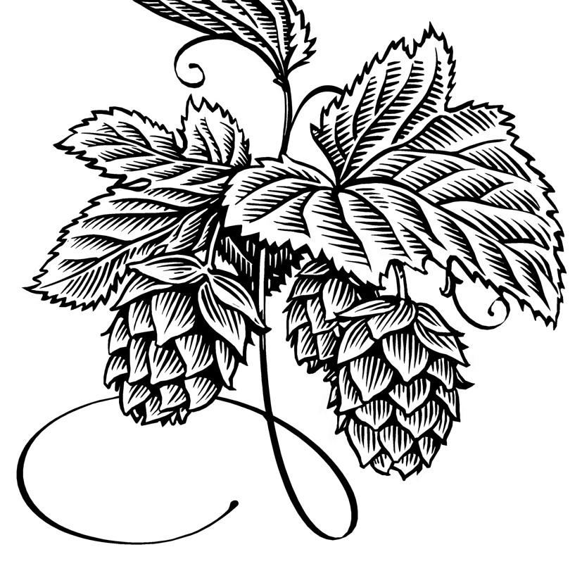 827x821 Hops Drawing Hops Drawing Simon Henshaw Illustration