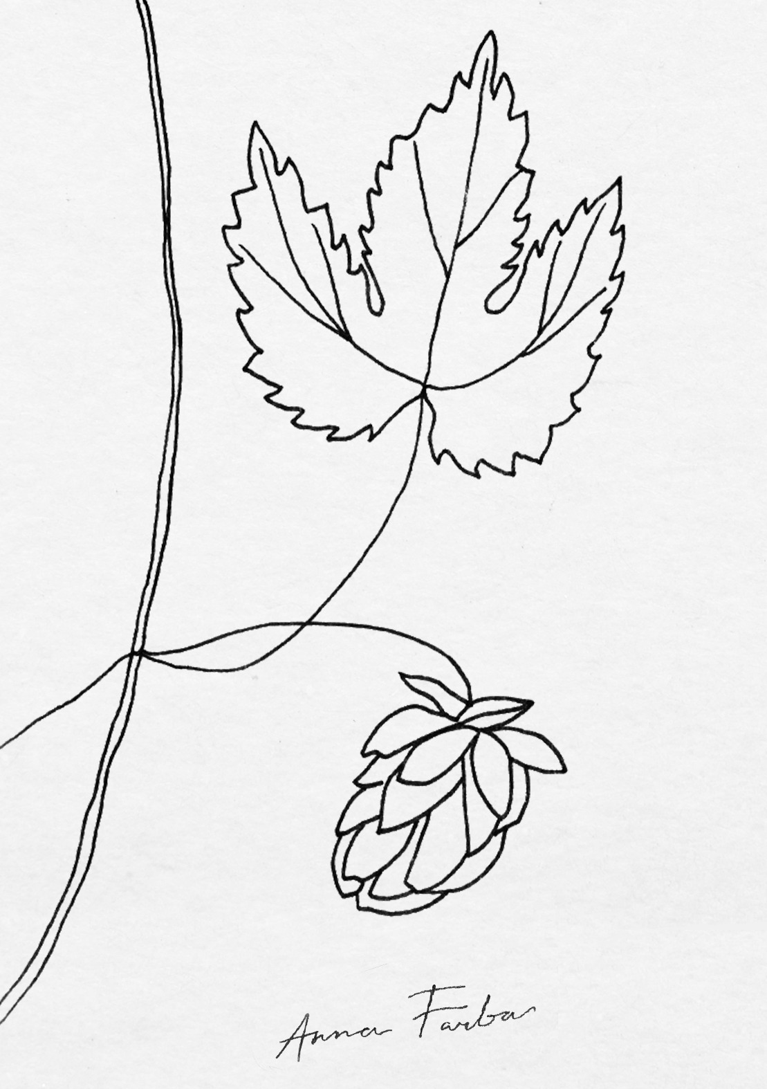 1109x1574 Botanical Sketchbook By Anna Farba. Drawing Plants And Flowers.