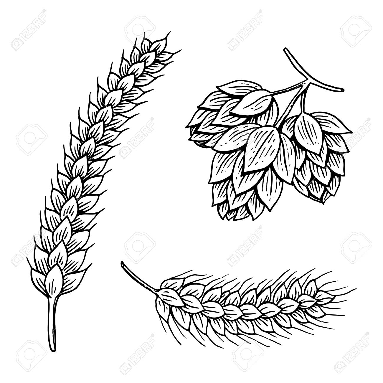 1300x1300 Barley And Wheat, Malt And Hops. Beer Of Oktoberfest. Engraved