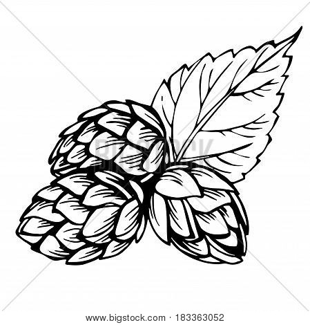 449x470 Sketch Hops. Black Illustration Vector Amp Photo Bigstock