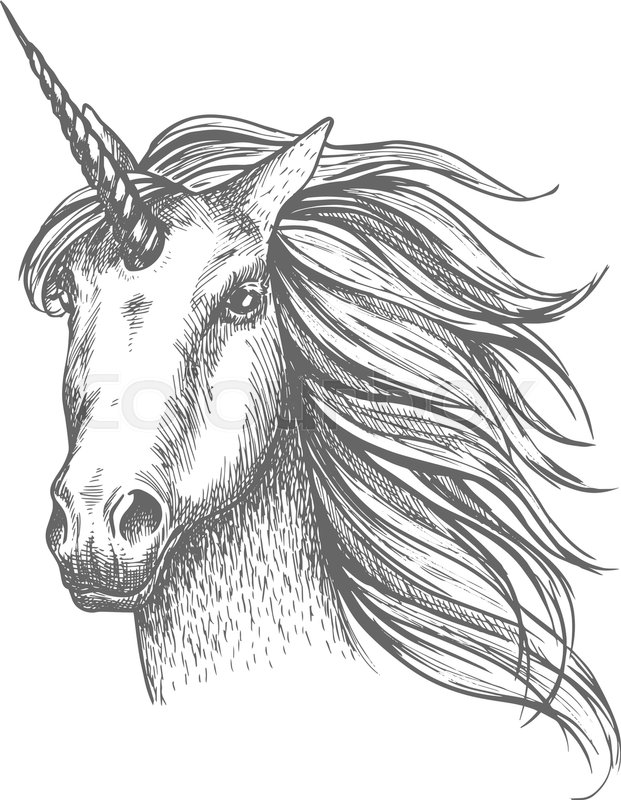 621x800 Unicorn Head Sketch. Mythical Horse, Heraldic Equine Head