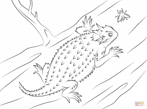 300x224 Colorful Gecko Download Coloring Page