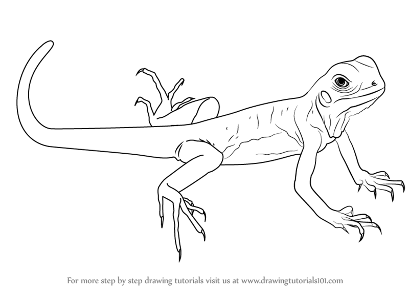 800x566 Learn How To Draw A Green Lizard (Lizards) Step By Step Drawing