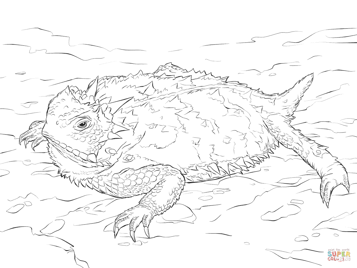 1200x900 Realistic Texas Horned Lizard Coloring Page Free Printable