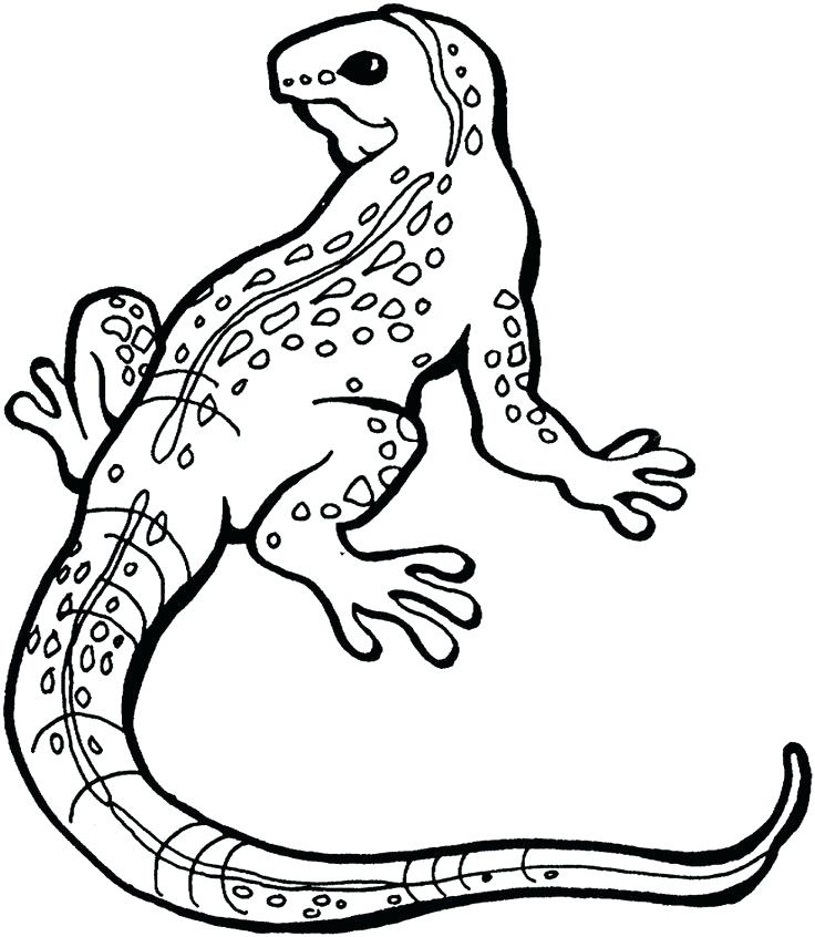 Horned Lizard Drawing at GetDrawings | Free download