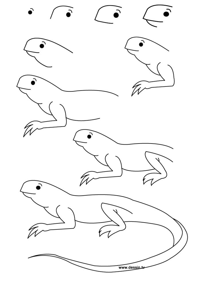 736x981 Pokemon Coloring Pictures Black And White Lizards Under Rock