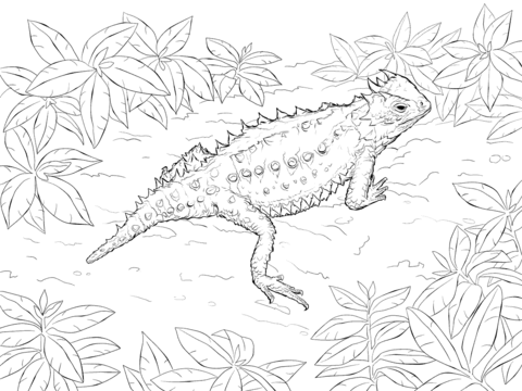 480x360 Desert Horned Lizard Coloring Page Free Printable Coloring Pages