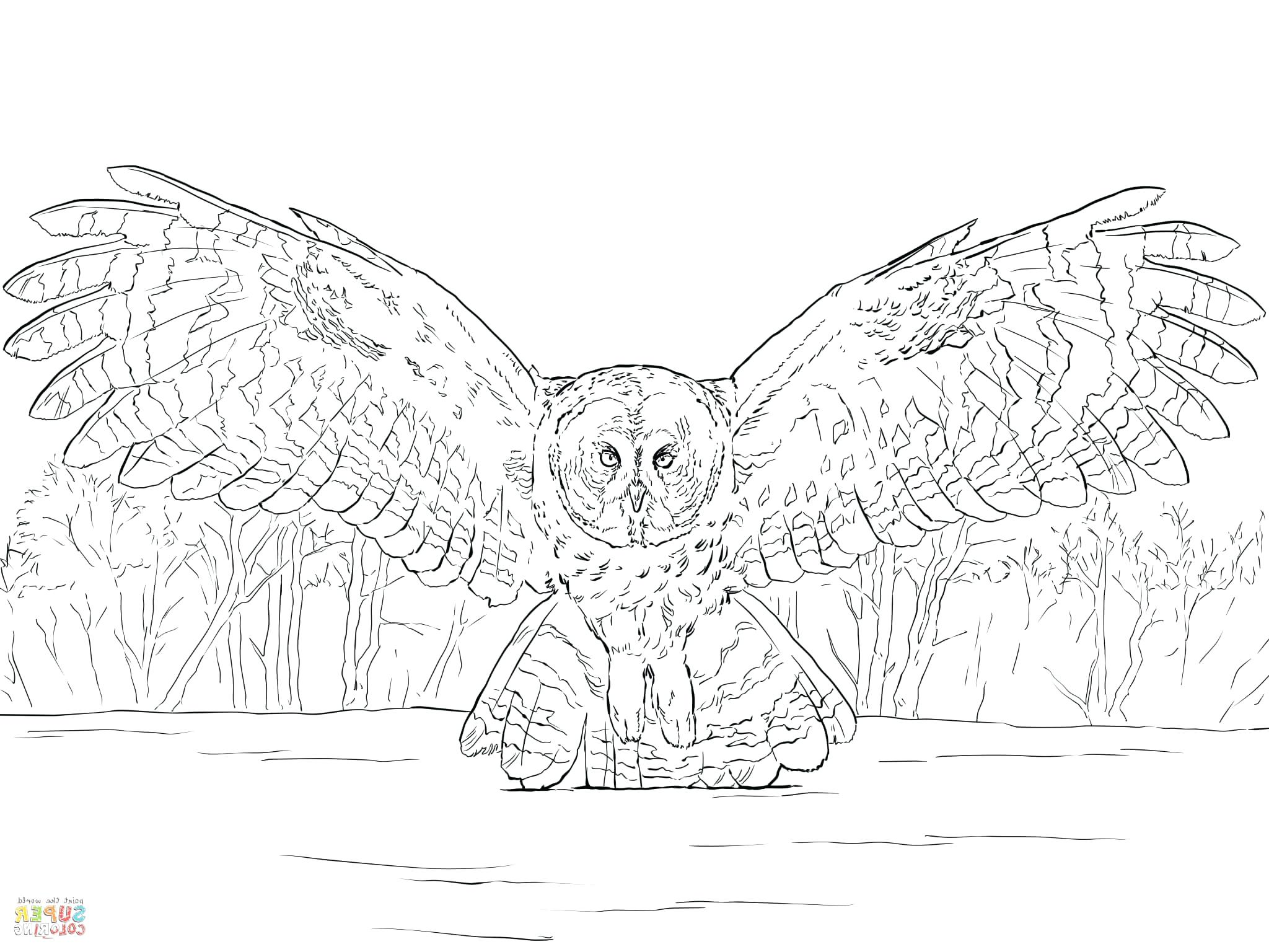 2048x1536 Great Horned Owl Colouring Page Gray Coloring Barn Gallery Photos