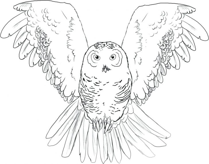 728x571 Great Horned Owl For Kids Coloring Page Gray Barn Gallery Photos