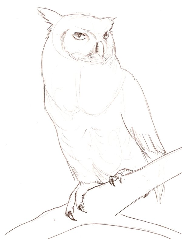 600x788 Great Horned Owl Sketch By Theroyalfrog