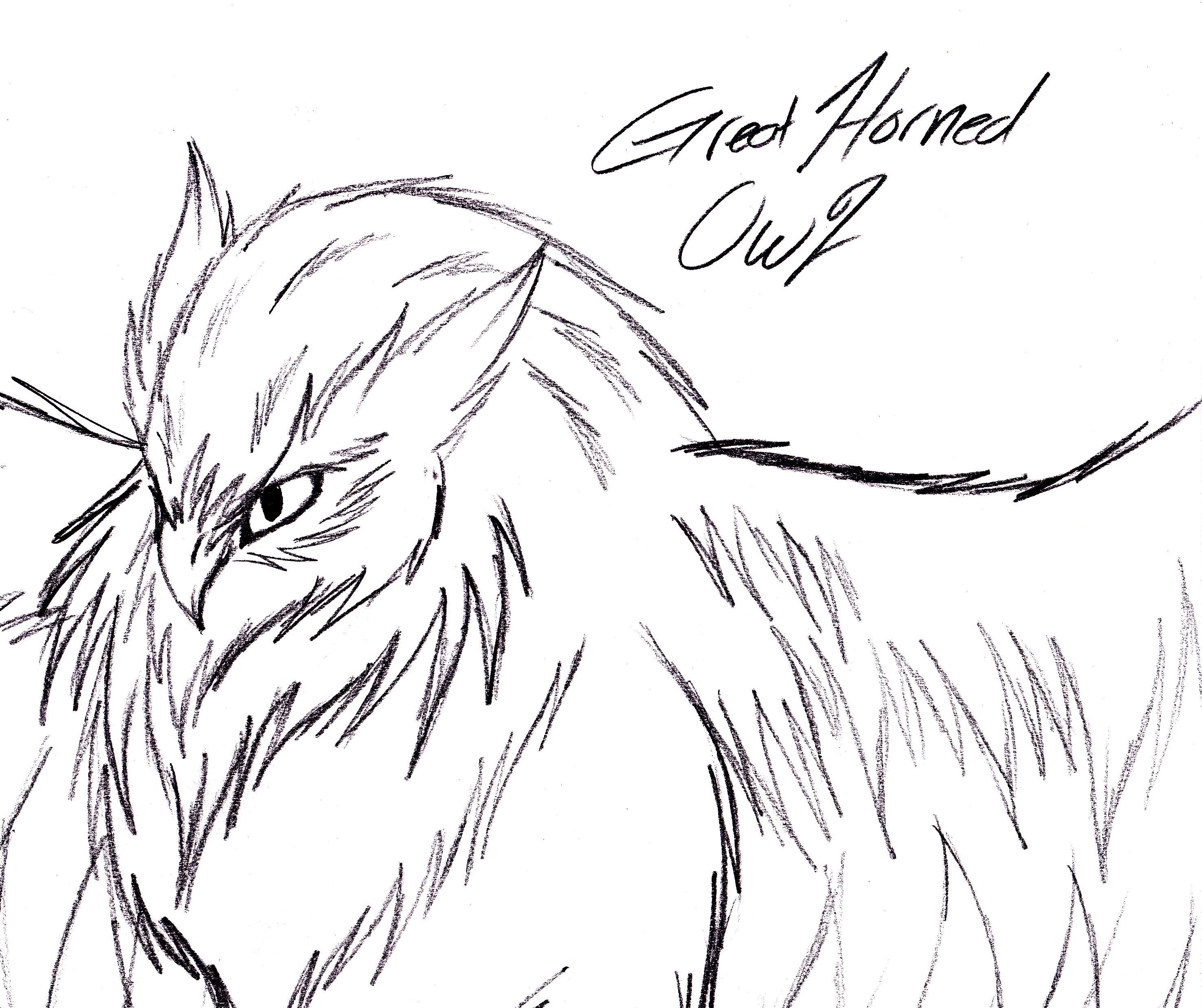 2951x2475 Great Horned Owl Sketch By Yamishadowzero