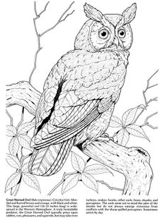 236x309 Great Horned Owl By Pintor Owl Licious Great