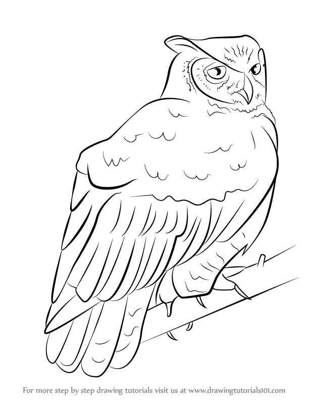 612x792 Learn How To Draw A Great Horned Owl (Owls) Step By Step Drawing