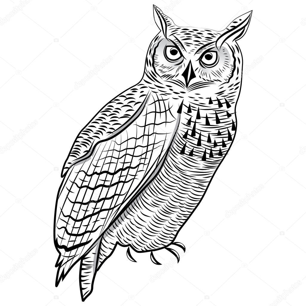 1024x1024 Owl Birdn Head Symbol For Mascot Or Emblem Design, Logo Vector