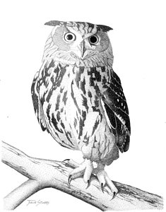235x300 Black And White Owl Drawings