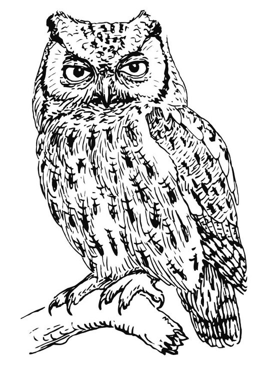 516x750 Coloring Page Owl