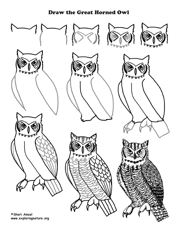 612x792 Great Horned) Drawing Lesson