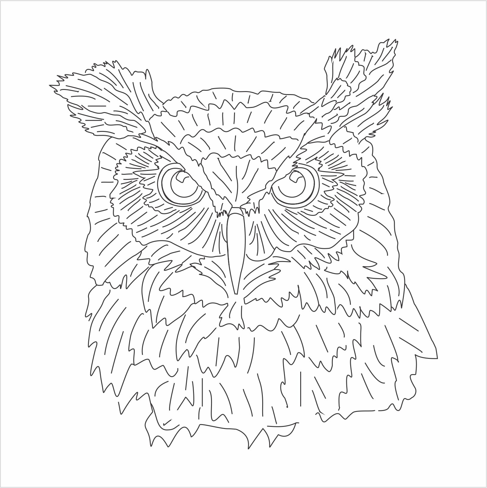 1627x1628 Great Horned Owl