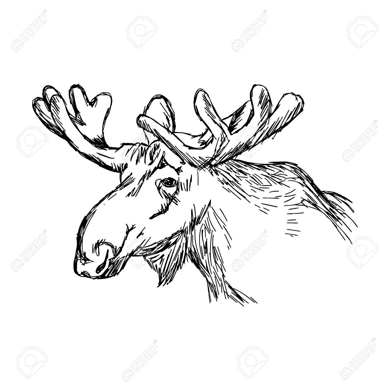 1300x1300 Illustration Doodle Of Sketch Moose Head Isolated On White