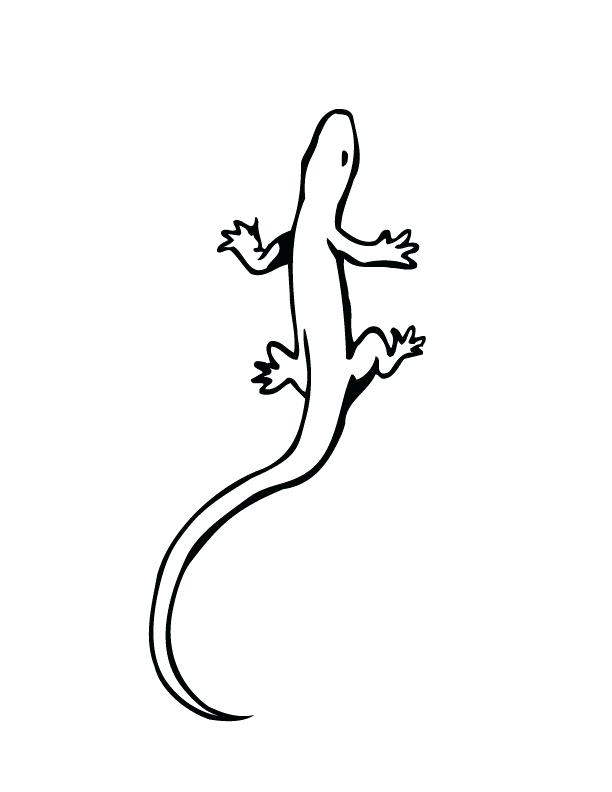 612x792 Lizard Coloring Pages