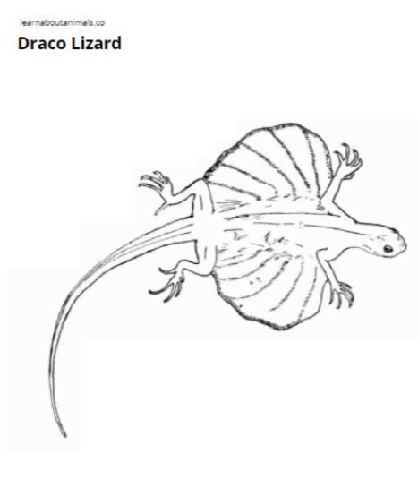 467x545 Lizards Coloring Pages Asia