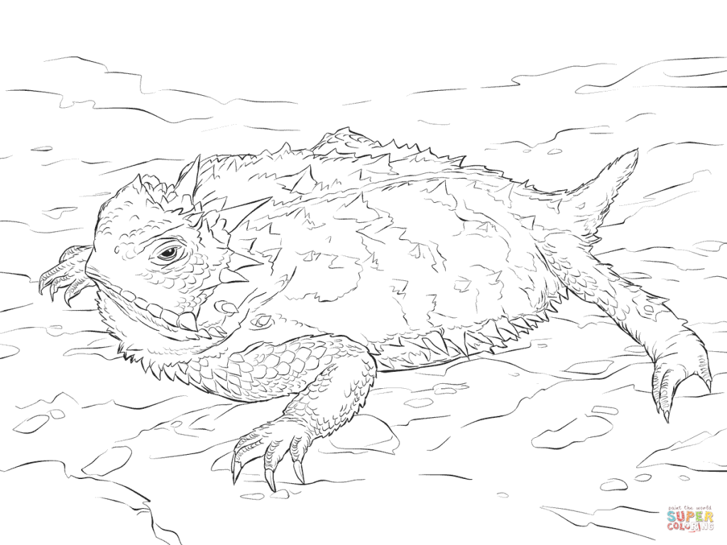 1024x768 Realistic Texas Horned Lizard Download Coloring Pages
