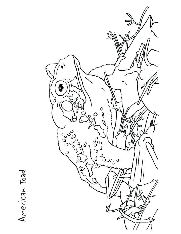 720x932 Toad Coloring Page This Coloring Page For Kids Features An Toad