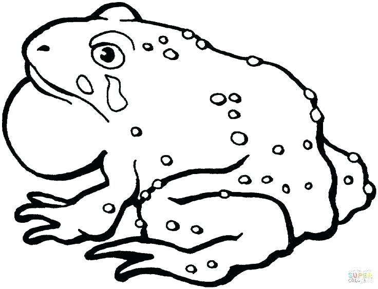 736x563 Toad Coloring Page