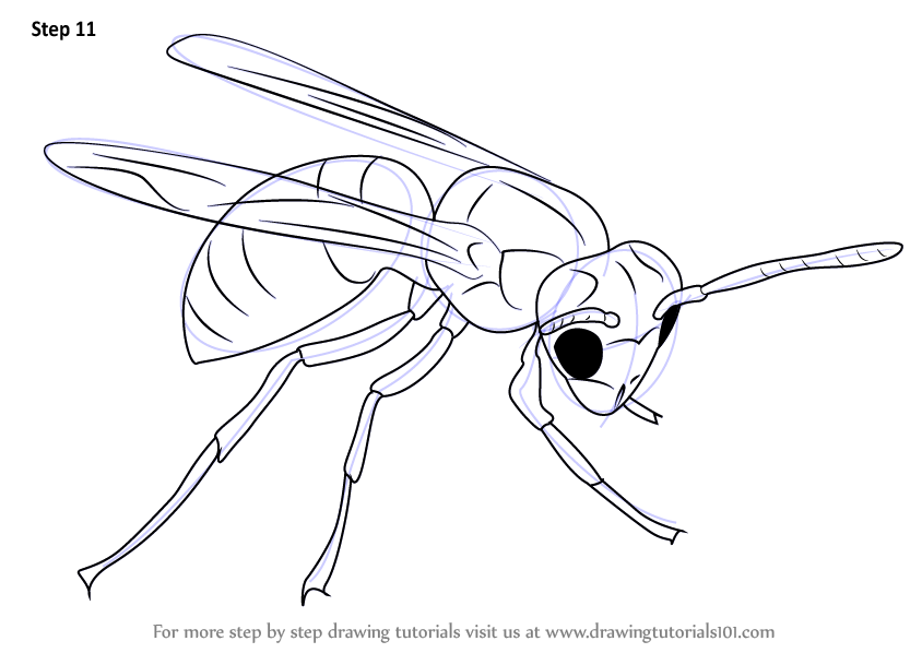 844x598 Learn How To Draw A Hornet (Insects) Step By Step Drawing Tutorials
