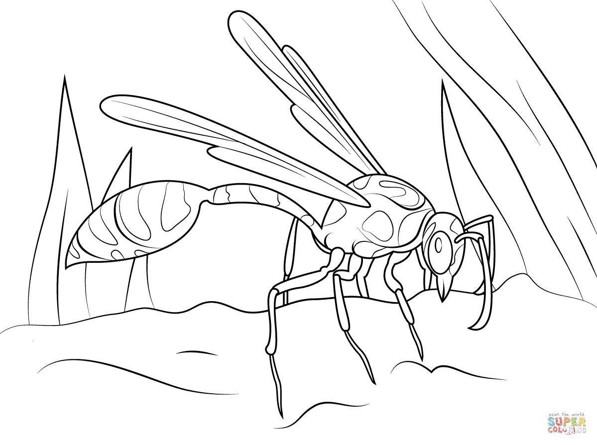 1199x894 Mud Dauber Wasp Coloring Page Free Printable Coloring Pages