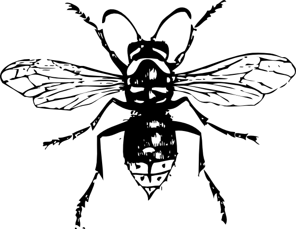 600x465 Bald Faced Hornet Clip Art